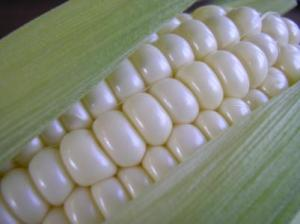 Corn-on-the-Cob (UIsed by permission.)