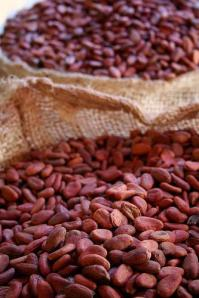 Cacao Beans, Unroasted (Used with permission.)