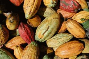 Cacao Pods (Used with permission.)