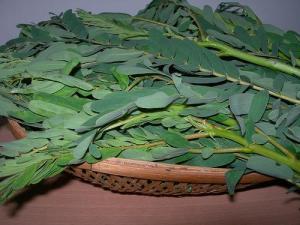 Agathi Leaves (Used with permission of A. Kamala.)