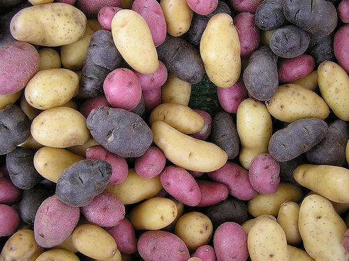Potatoes of Infinite Diversity (Used with permission.)