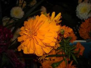 Marigold for Day of the Dead (Used with permission.)