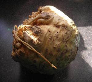 celeriac-1