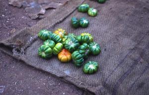 eggplant-africa-senegal