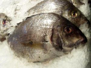 Fish on Ice (Photo credit: Tina Vance)