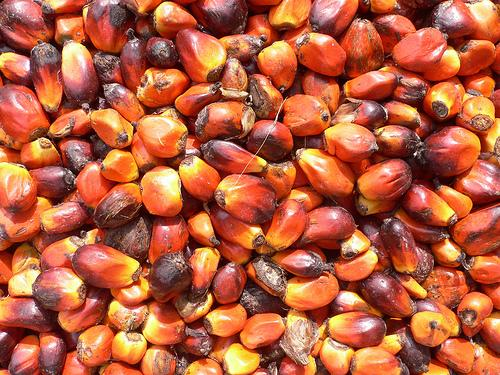 African Oil Palm Seeds (Photo credit: One Village Initiative)