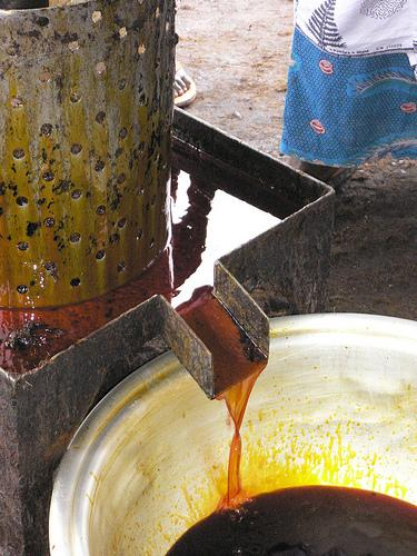 Palm oil in all its orangeness. (Photo credit: One Village Initiative)