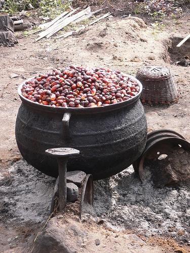 Preparing the oil seeds for processing (Photo credit: One Village Inititive)