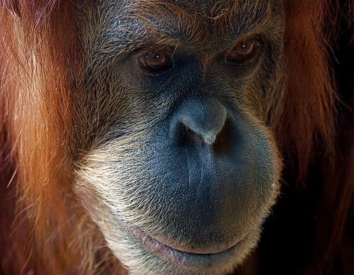 Palm Oil Exile