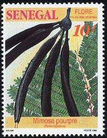 Africa parkia_biglobosa_stamp