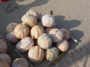 Africa pumpkin 4