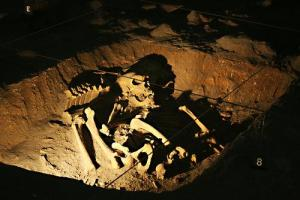 Archaeology Skeletons
