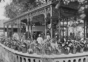 D'Angelis Tea Garden, Madras, 1906
