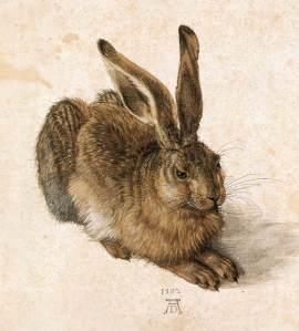 Hare, by Albrecht Drurer