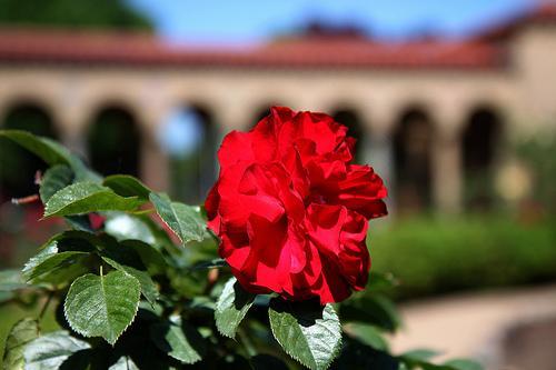 Monastic Gardens 12