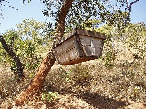 Beehive in Malawi (Photo credit: Josh Wood)