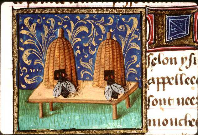 Bees France medieval
