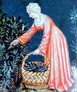 Medieval medicine herbs