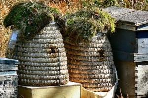 Hives (Photo credit: Pieter Musterd)