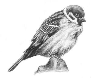 Eggs Sparrow