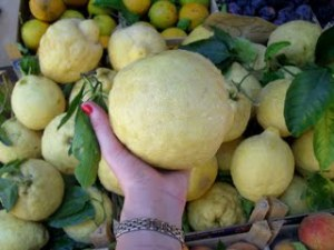 Sorrento Lemon, the Size of a Hand