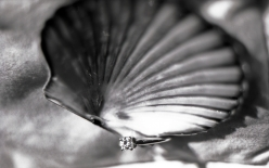 Camino scallop shell