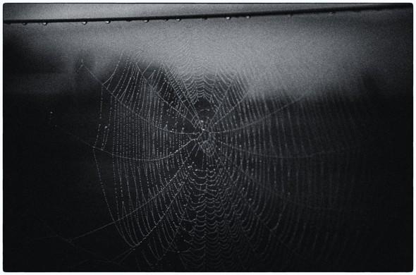 Nik Silver cobwebs