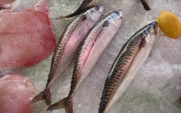 France fish