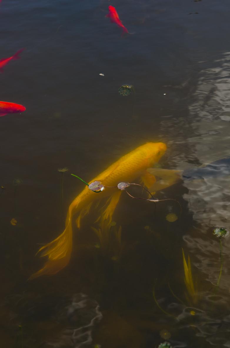 Fish resize