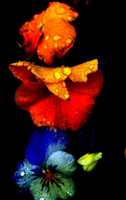 Flowers of Many Colors: May 8, 2013