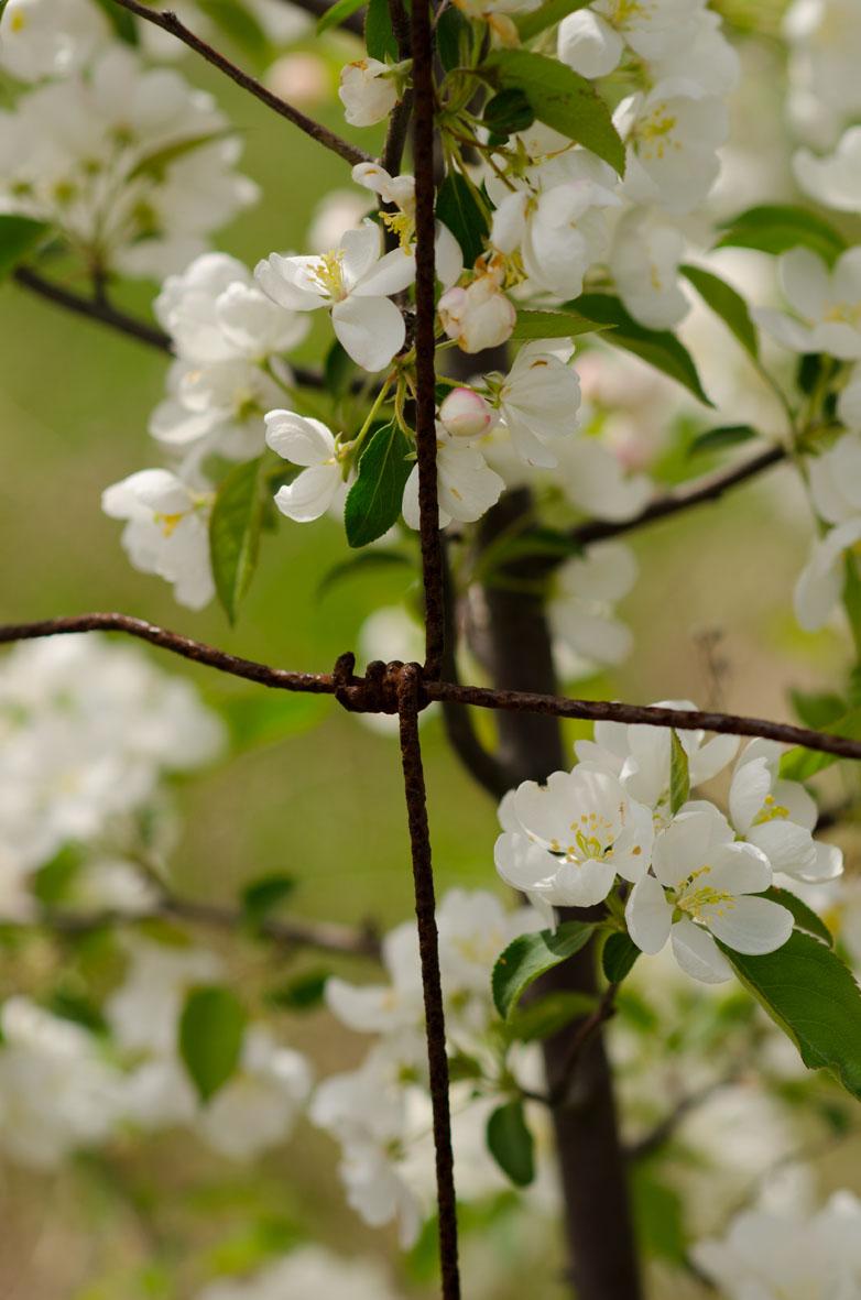 Scenes of spring 2 resize