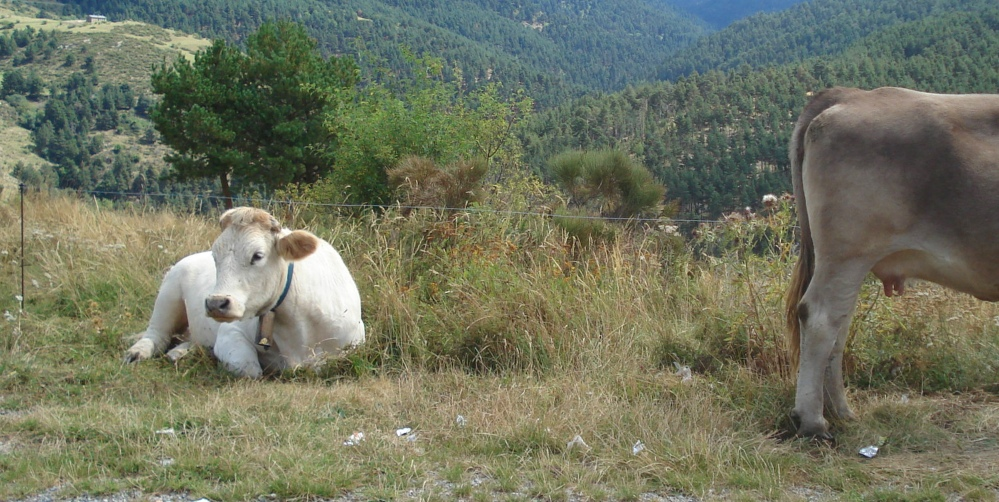Pyrenees 2 rs
