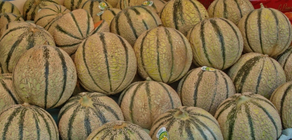 Melons form France rs