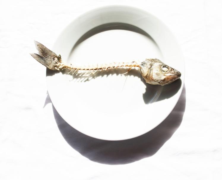 Project 2 6 Fish skeleton 3