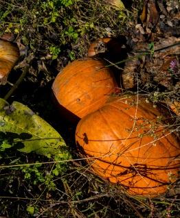 Pumpkins rs