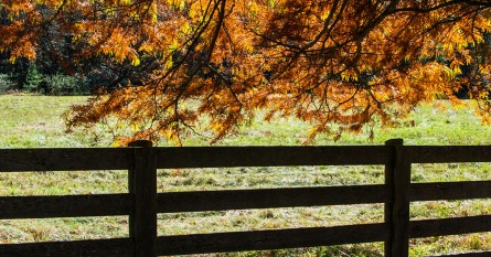 Tree fence rs