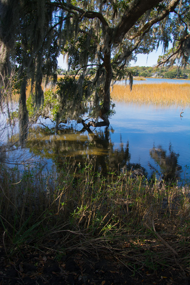Marsh at Boone Hall Charleston SC