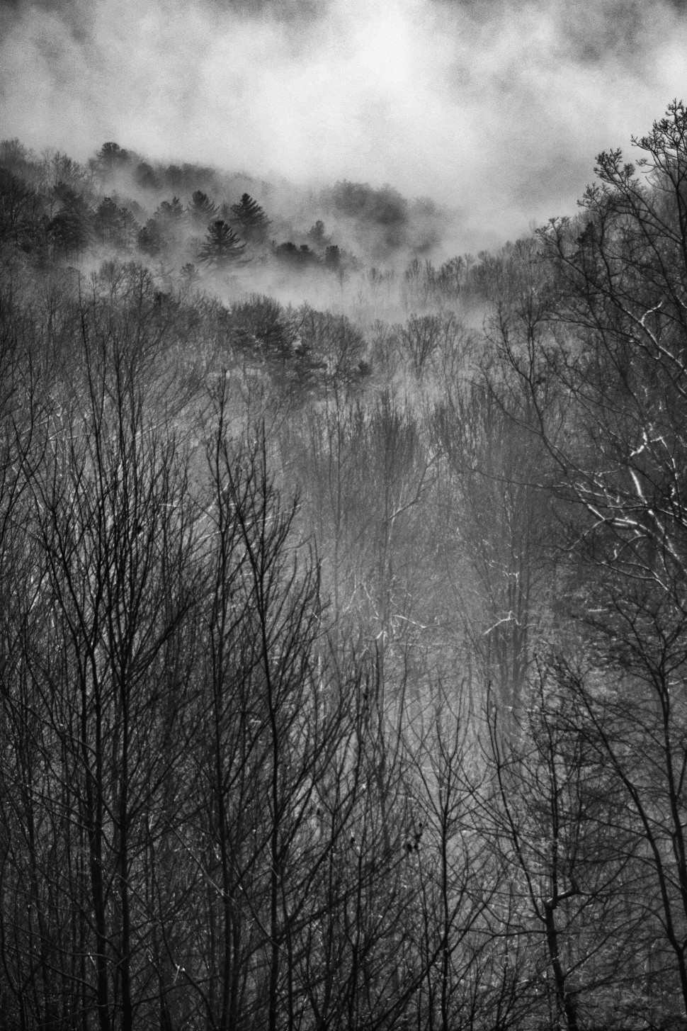 Winter BW 2