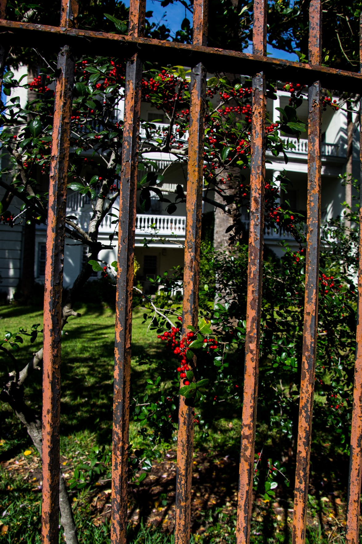 House fence Charleston