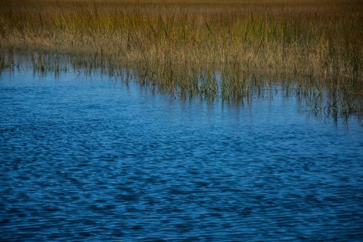 Marsh Charleston