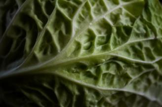 savoy-cabbage-5.jpg
