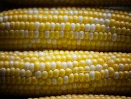 Corn 1 rs