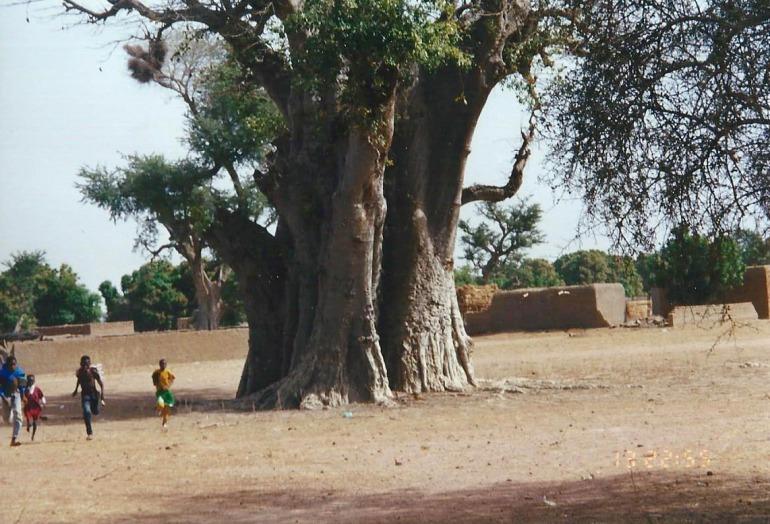 Africa village scene baobab