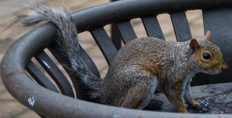 Squirrel 2 rs