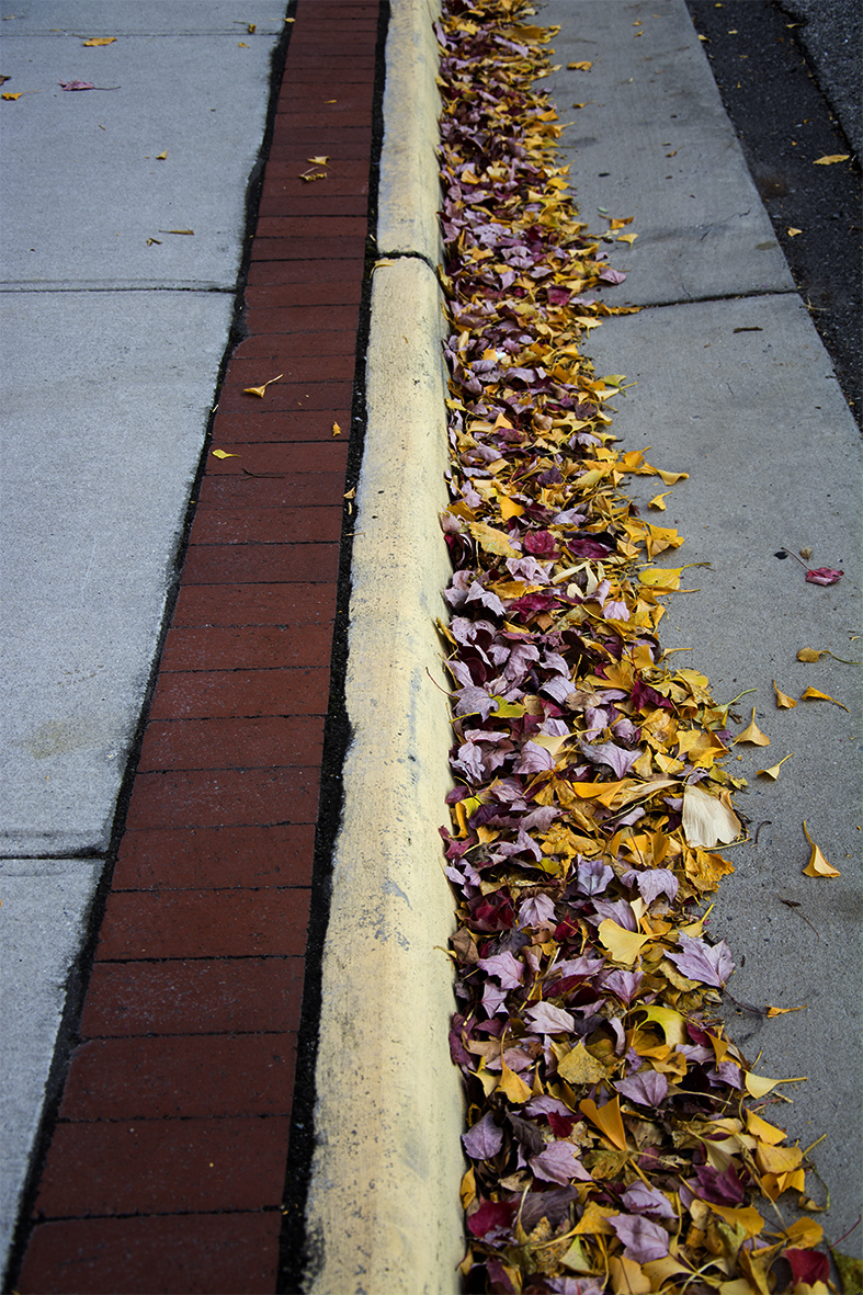 Leaves in the Street