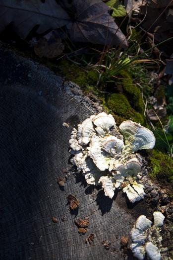 Mushrooms rs 2