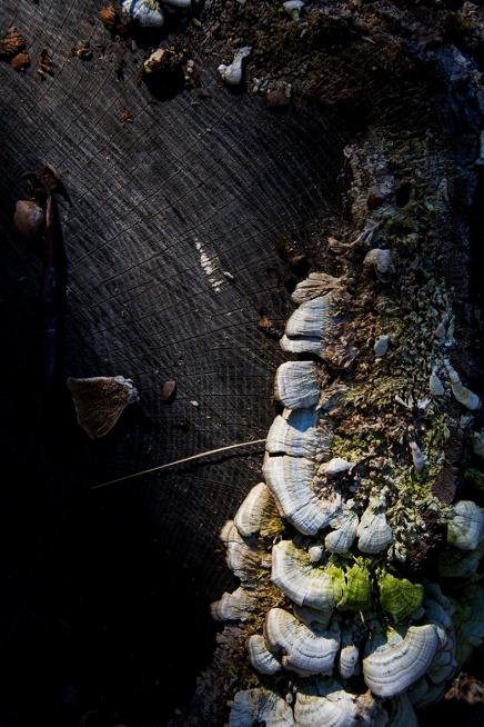 Mushrooms rs