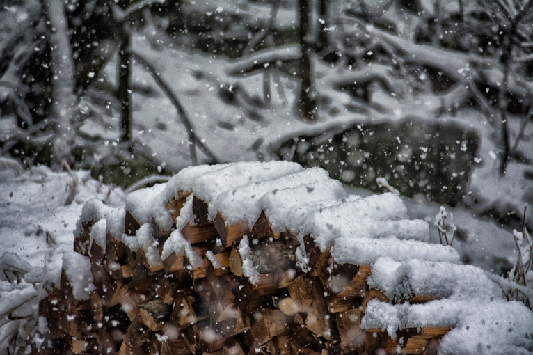 The edge of the woods ... . (Credit: C. Bertelsen)