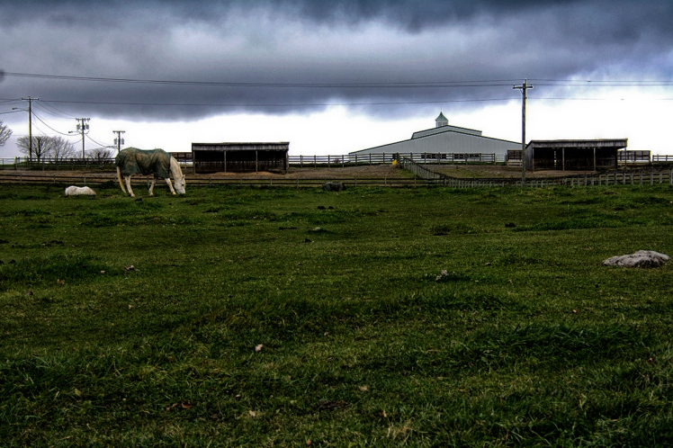Solitude horse rs ce
