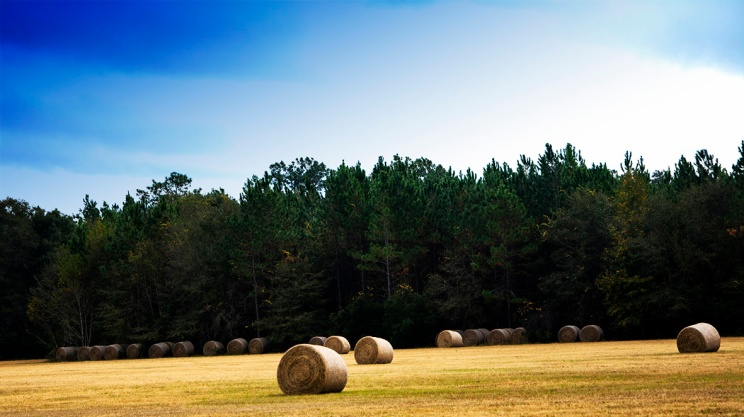 Haystacks Swarming (Credit: C. Bertelsen)